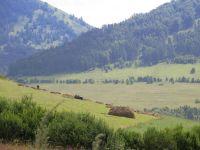 Горный Алтай: Вид с перевала Комарский (85.82 Kb)