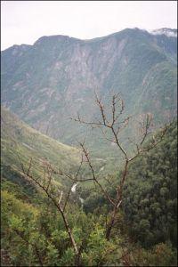 Горный Алтай: Река Башкаус (38.97 Kb)