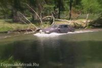Горный Алтай: Скриншот видео (29 Kb)